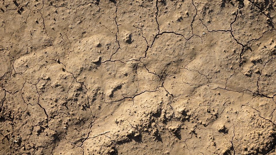 Charakterystyka różnych gleb – ogrodnictwo