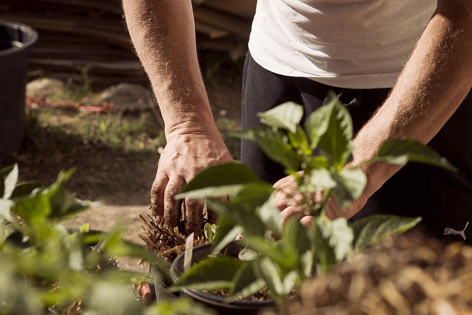 Jak Sadzić Rośliny - ziemia ogrodowa